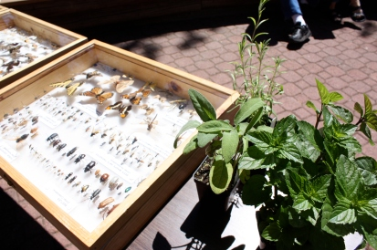 An insect display next to some of the plants for sale.